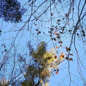 Korony drzew