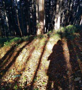 Cień w lesie